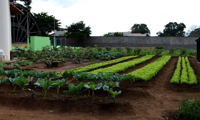 Hortaliças são 100% orgânicas e cultivadas no Case Palmas