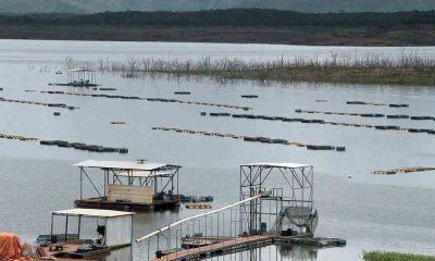 Em Niquelândia (GO), em um dos empreendimentos do grupo Aquaporto/Aquamérica, a criação de tilápia é feita em tanques-rede