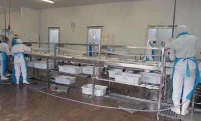Em Niquelândia, o grupo Aquaporto/Aquamérica e a Lake's Fish geram em torno de 150 empregos diretos