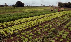 Projeto de Irrigação São João ganhará melhorias com investimentos do PDRIS - Crédito da Foto: Joatan Silva/Governo do Tocantins;