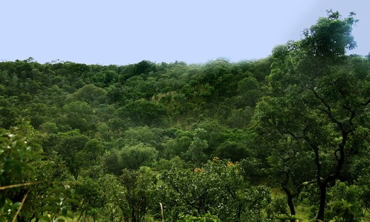 Governo do Tocantins vai investir em tecnologia para auxiliar no combate ao desmatamento