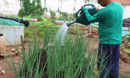 As hortaliças plantadas pelos presos são vendidas na própria unidade e também na feira de Araguaína