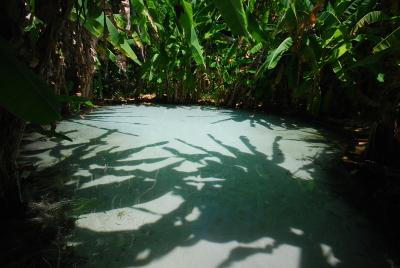 Dentre os principais problemas encontrados estavam  a exposição de raízes, falta de estrutura para acesso aos cursos d'água e a perda da mata ciliar nos rios