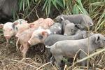 O programa atende especificamente a projetos agrícolas voltados a criação de pequenos animais (galinhas e porcos), cultivo de culturas como arroz, feijão e mandioca