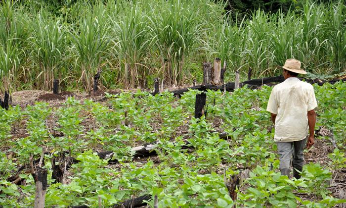 O programa atende especificamente projetos agrícolas voltados à criação de pequenos animais (galinhas e porcos), e ao cultivo de culturas como arroz, feijão e mandioca