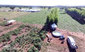 Agroalmas 2018 tem como foco  o fortalecimento das cadeias produtivas da piscicultura e da bovinocultura
