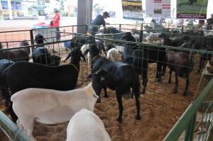 Expositores de animais que vão participar da Agrotins 2018, devem buscar informações sobre as normas do regulamento sanitário geral