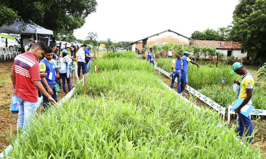 Dia de Campo foi realizado na Fazenda Pindoba