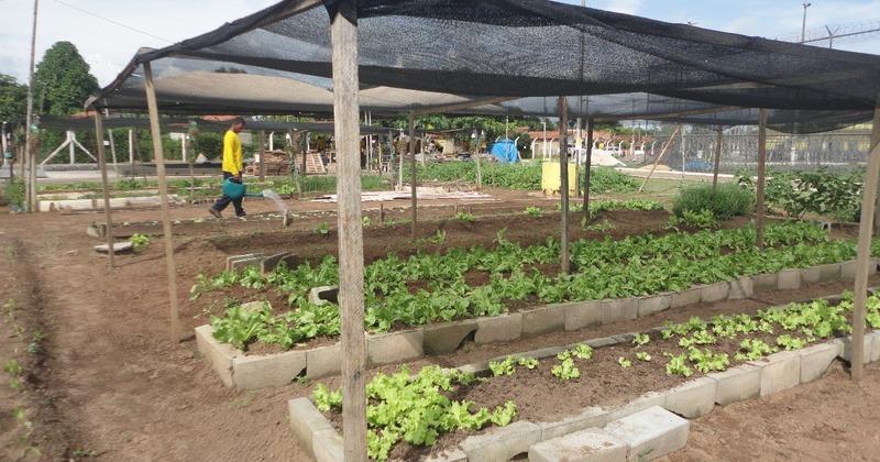 Hortas ajudam a reduzir os custos com alimentação nas casas penais.