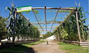 Agrotins Tunel Vegetal-Foto Doemir Cintra-Governo do Tocantins (2)_300.jpg