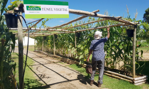 Agrotins Tunel Vegetal-Foto Doemir Cintra-Governo do Tocantins (3)_300.jpg