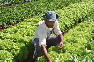 Ruraltins inicia Programa de Aquisição de Alimentos