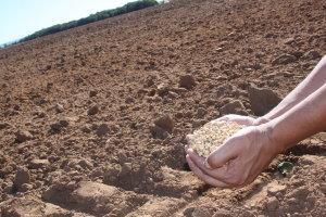 Vazio sanitário da soja encerra dia 30 e sojicultores poderão iniciar plantio da oleaginosa