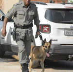 Cão farejador da Polícia Militar de Goiás foi utilizado na Operação Avalanche em Taguatinga