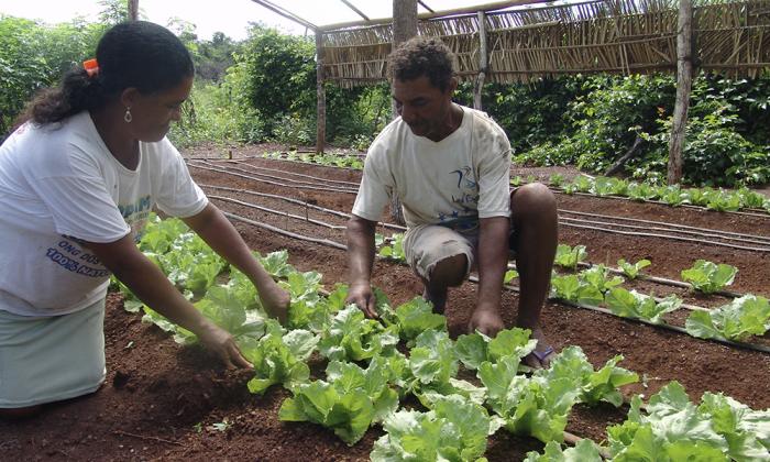 Os produtores cadastrados PAA na modalidade Compra Direta Local da Agricultura Familiar já podem comercializar sua produção