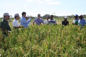 dia de campo arroz Araguatins - Alaides Cardoso - Rurtaltins(49).JPG