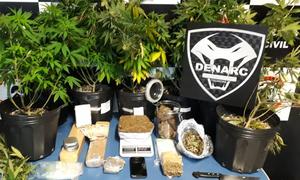 Droga era produzida com plantas geneticamente modificadas, alcançando poder entorpecente de até dez vezes mais que a maconha convencional