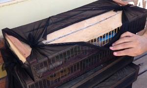 Pássaros foram encontrados em um ônibus de turismo no posto da Policia Rodoviária Federal (PRF) em Guaraí
