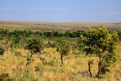 Conselho é responsável por aprovar e coordenar a estrutura do sistema de gestão da Reserva da Biosfera do Cerrado