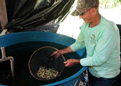 Projeto Pirapitinga, no município de Almas, novamente é parceiro para a segunda fase na doação de alevinos