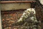 O edital tem como objetivo fortalecer a cadeia produtiva do mel e de seus derivados para que professores e pesquisadores possam aprofundar suas pesquisas
