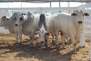 Adapec promove reunião com proprietários de leilões nesta terça-feira em Palmas