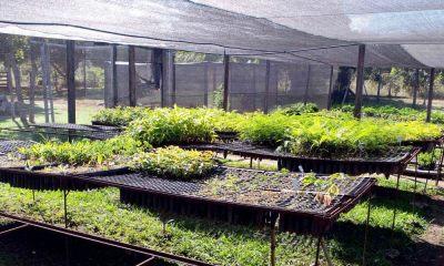 Mudas de plantas nativas serão utilizadas na recuperação de nascentes de bacias hidrográficas no Tocantins