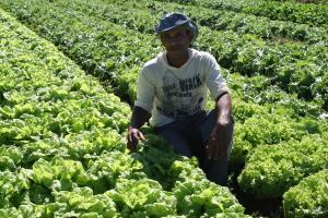 Mais de R$ 25 milhões foram investidos na agricultura familiar do Tocantins em 2018 - Governo do Tocantins