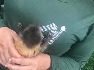 Filhotes de animais silvestres correm risco de morte sem cuidados especializados