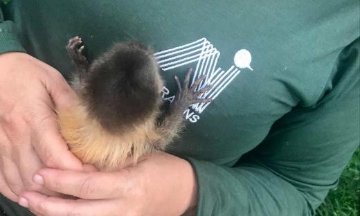 As chances de sobrevivência de filhotes de animais silvestres são mínimas sob os cuidados de pessoas que não possuem conhecimento especializado