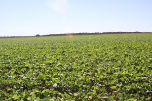 Janela de plantio da soja sequeiro fecha nesta terça-feira, 15, e produtores tem cinco dias úteis para apresentar cadastro na Adapec