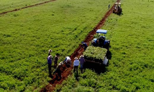 Cerca de três mil mudas nativas do cerrado serão plantadas em 25 hectares de área degradada