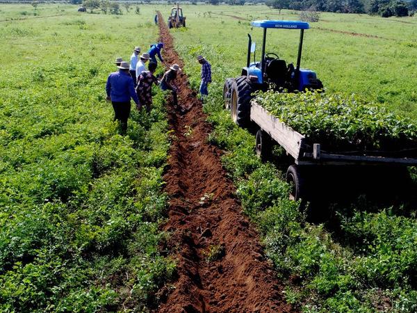 Plantio de mudas do Projeto Campo Sustentável na Fazenda Kehler realizado pela Semarh