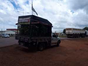 Carga com mudas frutíferas irregular é apreendida em Palmas
