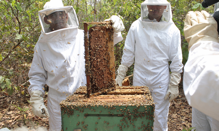 A concessão busca fortalecer a cadeia produtiva do mel e derivados no Estado