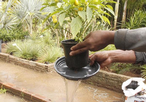 Cuidados para eliminar os focos do mosquito  deve ser redobrado no período chuvoso