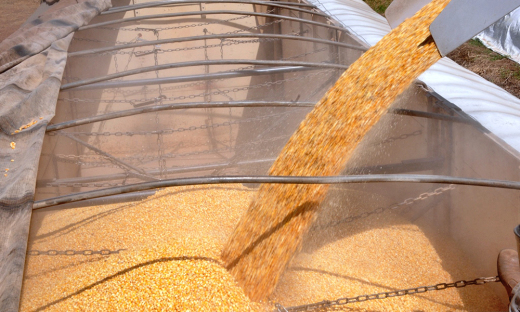 Os indicadores da safra de milho 2018/2019 apontam para uma produção de 917 mil toneladas no Tocantins