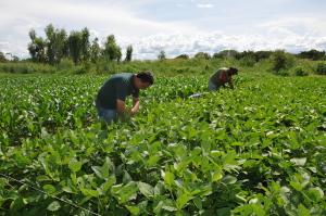 No local, os expositores plantam sementes de alto padrão de qualidade e produtividade