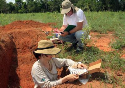 Análise será feita para observar se houve melhoria das condições do solo, como a fertilidade