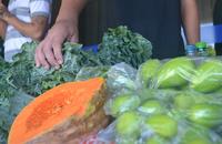 95% das hortaliças foram vendidas na feira do Case