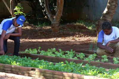 Horta escolar com o formato de diferentes figuras geométricas foi implantada na escola em 2018