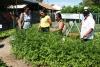 Agricultores visitam horta circular e recebem informações sobre cultivo de hortaliças