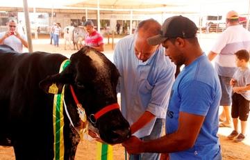 Vaca Apoema recebe premiação de primeiro lugar no torneio leiteiro.