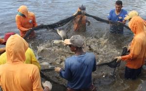 Os piscicultores utilizam barramentos, viveiros escavados, tanques rede e açudes como principais estruturas de produção