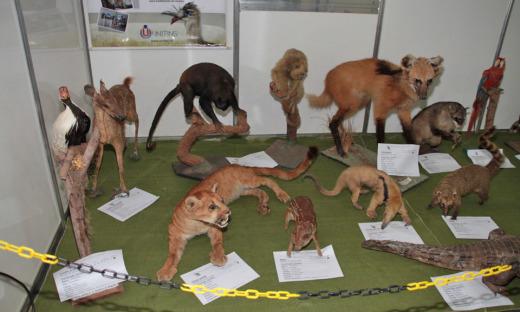 Unitins promove exposições de animais empalhados e itens arqueológicos