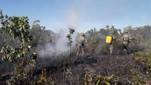 Aulas práticas do Manejo Integrado do Fogo ajudam a conter grandes incêndios  florestais