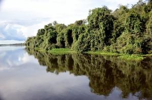 A Semana do Meio Ambiente do Tocantins será celebrada com ações de sensibilização e atividades conjuntas entre órgãos parceiros do Estado e municípios