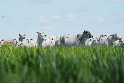 Recuperação de pastagens degradas é uma das ações do Plano Agricultura de Baixo Carbono