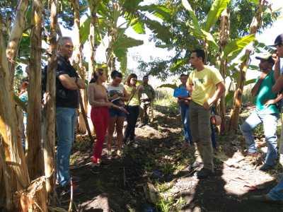 Sistema agroflorestal com cultivo de banana em área rural de Mateiros