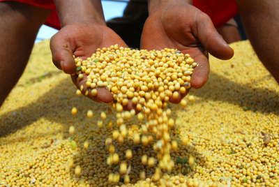 Soja é o principal produto de exportação do Tocantins